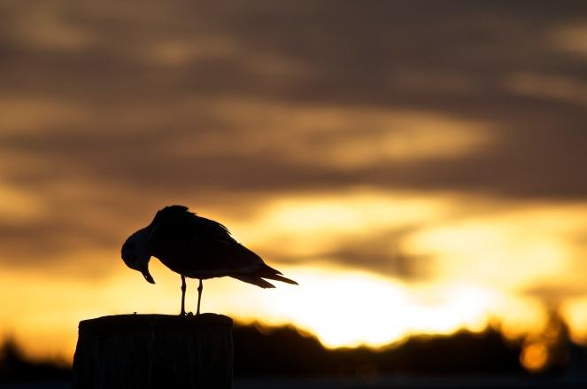 morning_prayer_at_tilghman_island_narrows