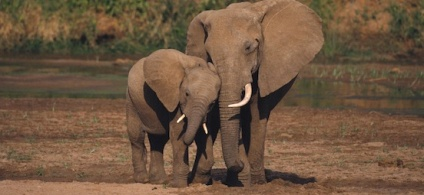 elephant-mother-and-baby